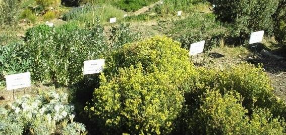 campo com plantas aromáticas
