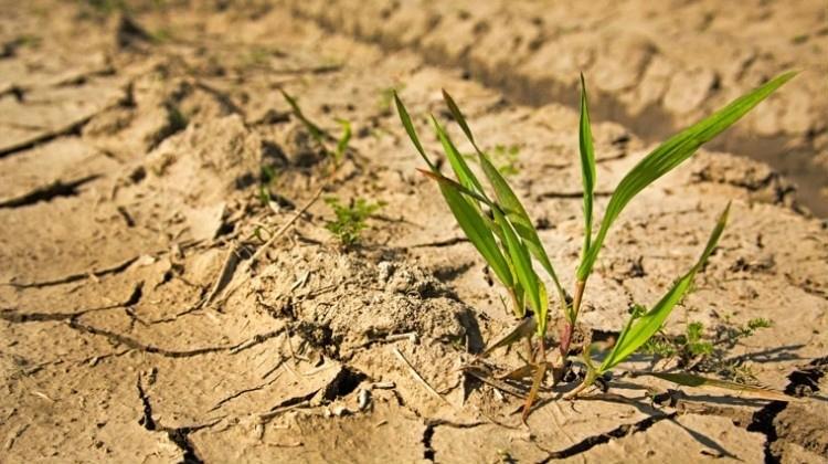 seca agricultura