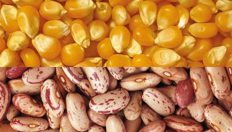 Festival do Milho e do Feijão