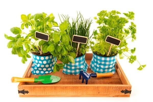 Ervas aromáticas e hortícolas
