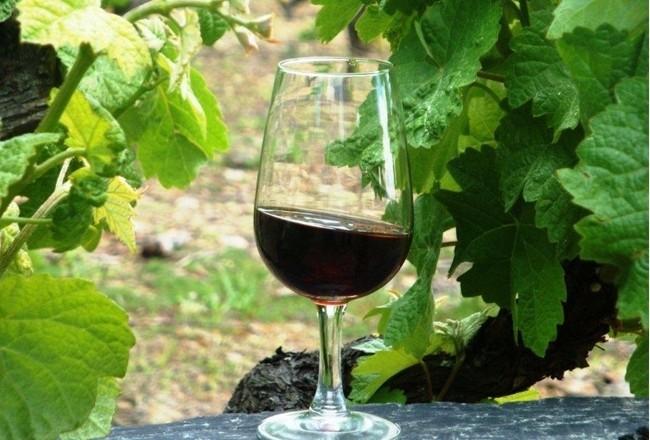 Vinho e vinha