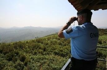 vigilância floresta