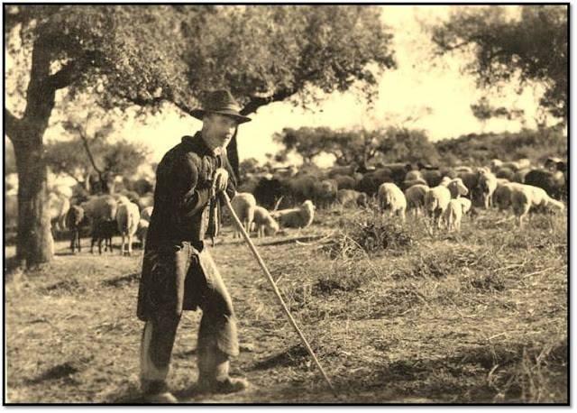 pastores campo branco