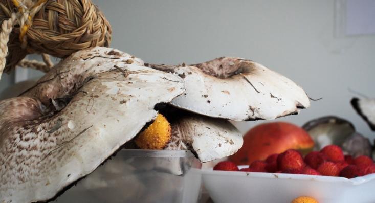 Feira do Cogumelo e do Medronho