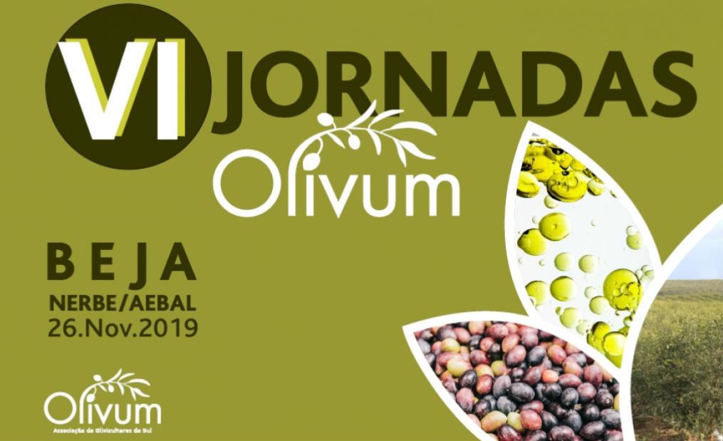 jornadas 2019 Olivum