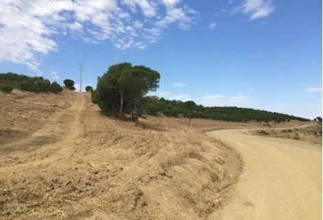 Mértola Fundo Florestal