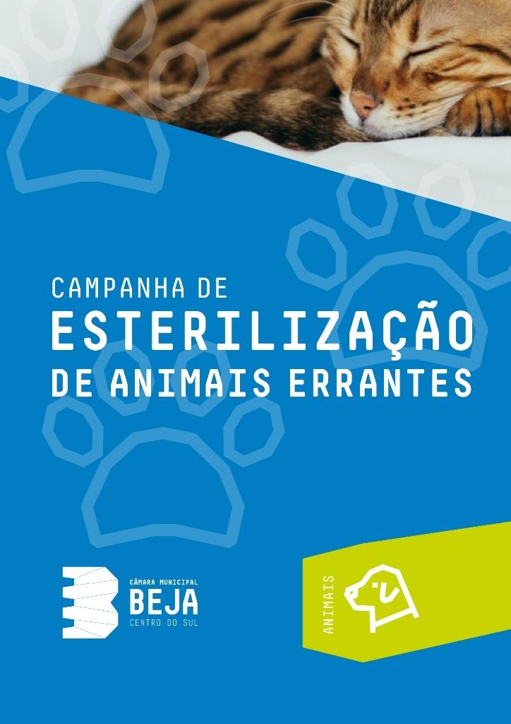 Beja lança campanha para esterilização de animais errantes