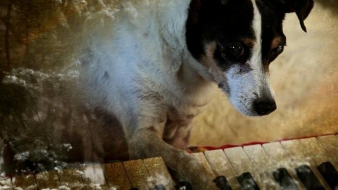 """""""Coração de cão"""" para ver no Pax Julia em Beja"""