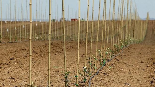 Jovens agricultores recebem mais de 35 milhões de euros em apoios públicos