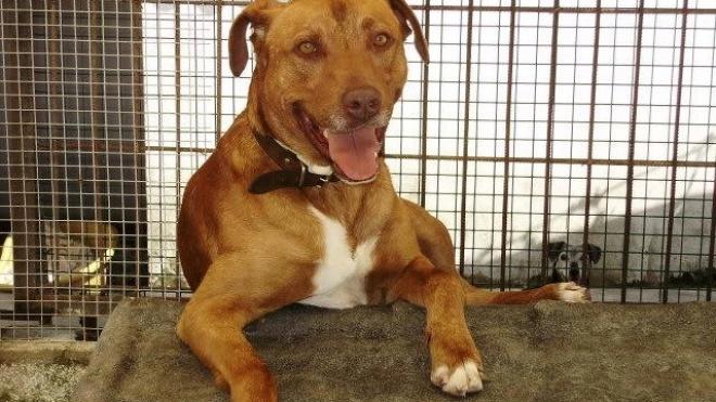 Tribunal de Beja entrega cão que matou criança à Associação Animal