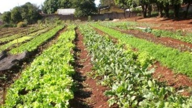 "Apoios da PAC deixam de fora ""alguns"" pequenos e médios agricultores"