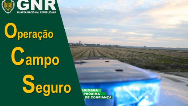 """Operação """"Campo Seguro"""" com mais detenções e mais azeitona apreendida"""