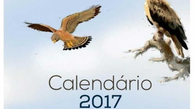 Calendário homenageia riqueza da avifauna de Castro Verde