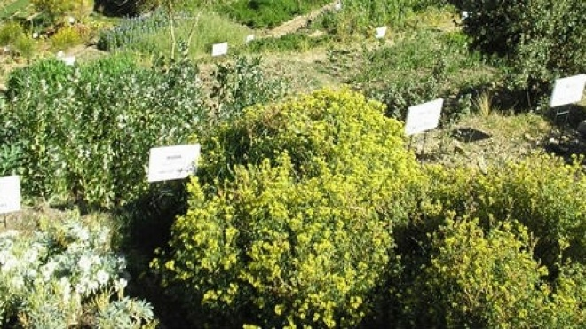 Academia das Plantas Aromáticas e Medicinais de Alqueva