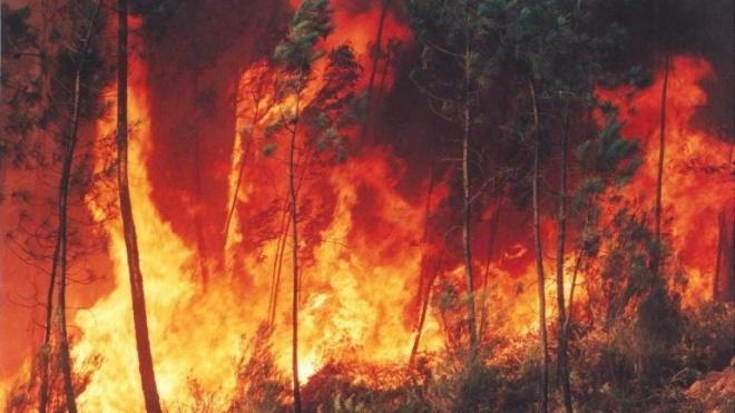 Distrito de Beja com fogo activo no Monte do Sardão, Cabeça Gorda