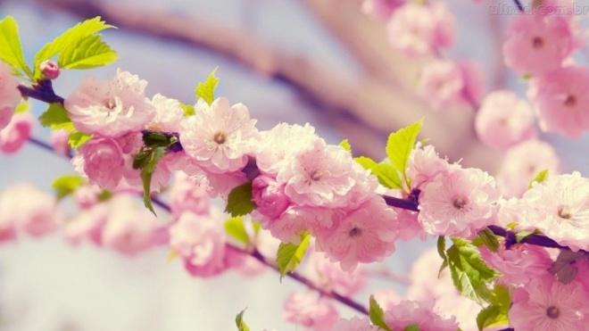 """""""Flores de Esperança"""": Primeira avaliação pública"""