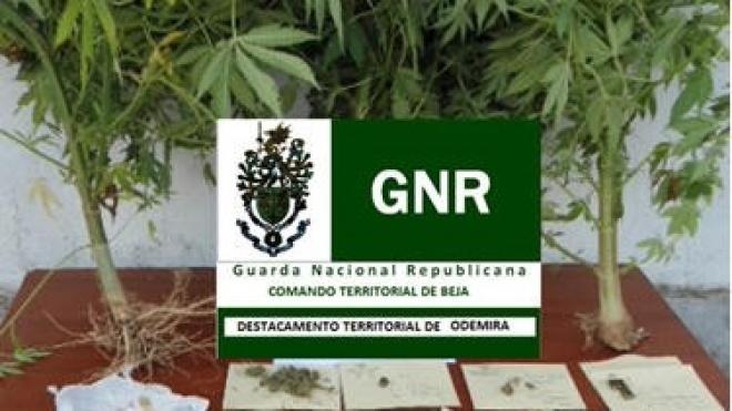 Detenção por tráfico de droga em Odemira