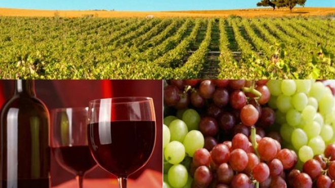 """O """"Radiografias"""" de hoje sugere """"Vinha: uva e vinho"""""""