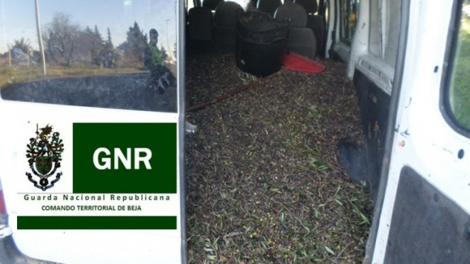 GNR identifica 20 pessoas por suspeita de furto de azeitona