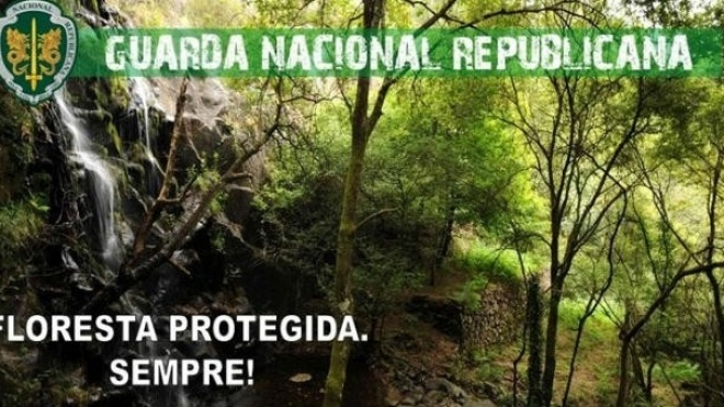 Operação Floresta Protegida