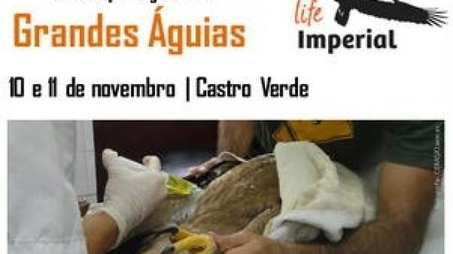 Workshop sobre tratamento e recuperação de grandes águias em Castro Verde