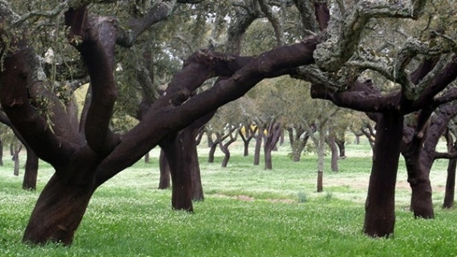 Quercus quer declaração de estado de emergência climática para o Alentejo