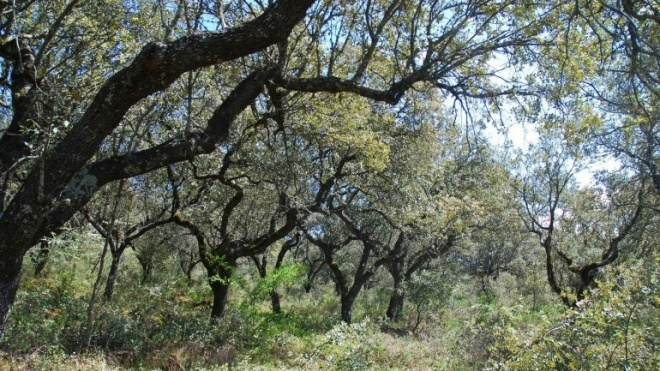 Alvito: Voluntariado jovem para a Natureza e Florestas