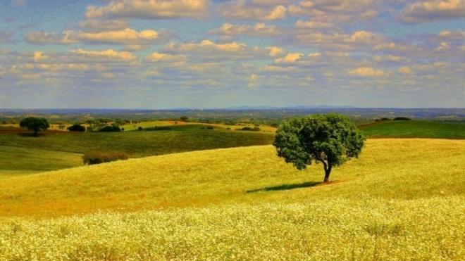 Sessão de informação para agricultores do concelho de Ferreira do Alentejo