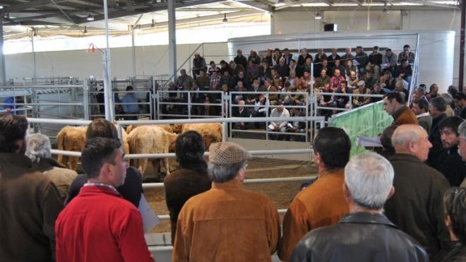 ACOS promove mais um leilão de bovinos