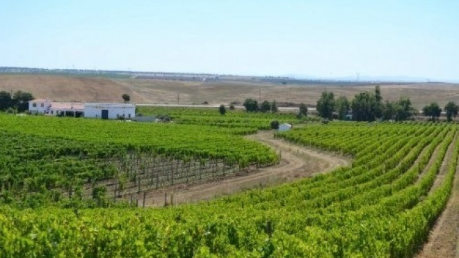 Alentejo é a melhor região vinícola do Mundo para visitar