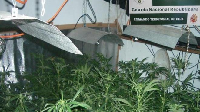 GNR de Beja faz detenção e apreensão de droga