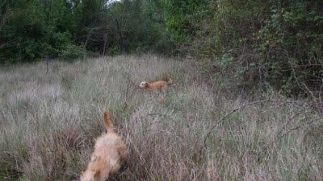 Organizações do setor da caça não aceitam discriminação por parte do Governo