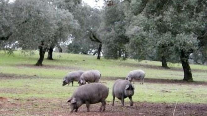 Primeiros passos para a criação da Cooperativa do Porco Alentejano em Ourique
