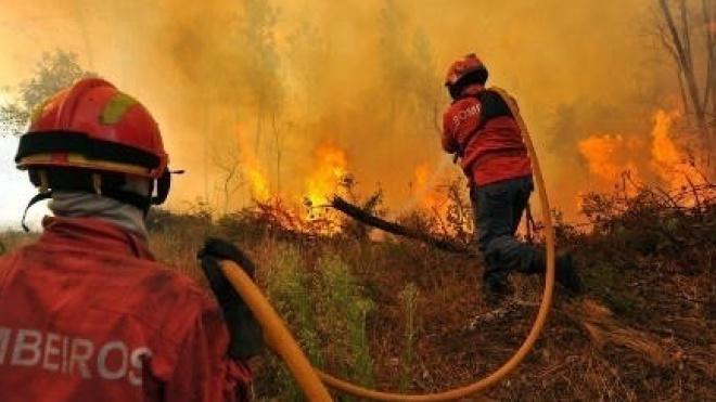 Plano de Defesa da Floresta de Mértola em fase de consulta pública