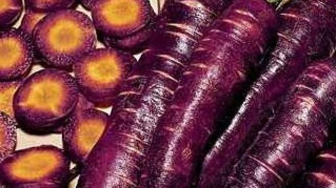 Cenoura-roxa é tema de conversa e mostra gastronómica