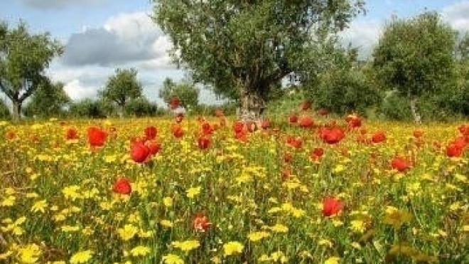 Início da Primavera com várias propostas para o fora de casa