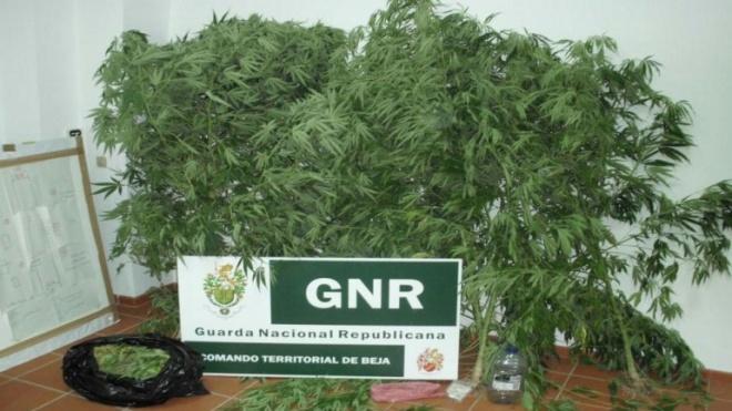 GNR faz detenções e apreensão de droga em Moura e Milfontes