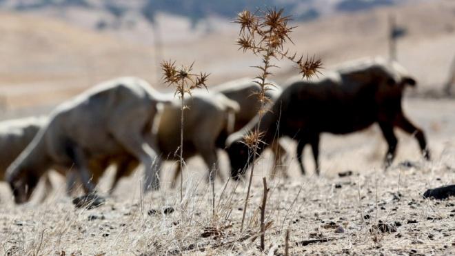 A falta de reservas de água é a consequência mais preocupante da seca
