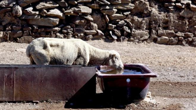 Ministério da Agricultura avança com 10 medidas de combate à seca