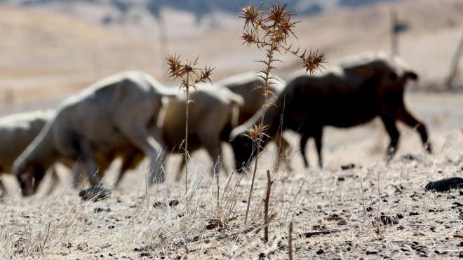 FAABA reclama medidas excepcionais contra a seca