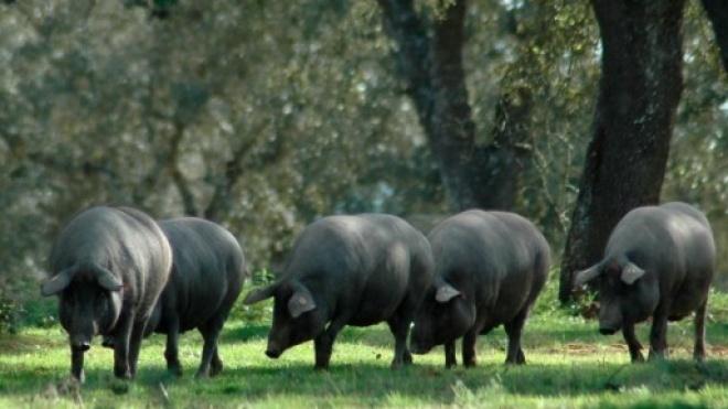 Ourique recebe iniciativa europeia de valorização dos produtos mediterrânicos