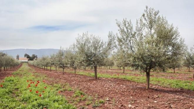 CAP esclarece agricultores em Beja