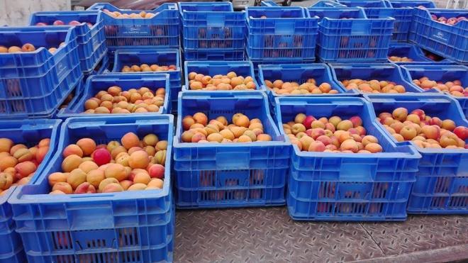 FairFruit e Município de Aljustrel fazem distribuição de fruta