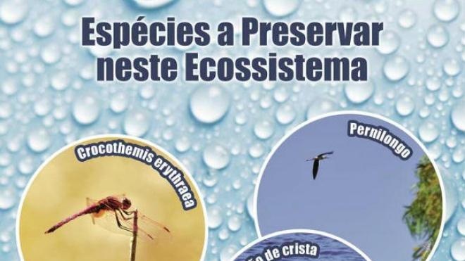 Praia da Mina apresenta exposição sobre o ecossistema da albufeira