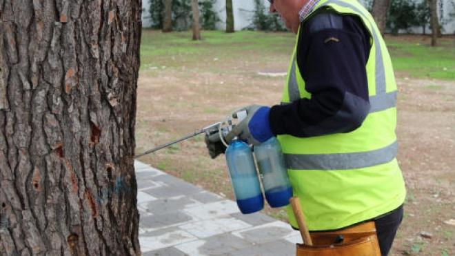 Câmara de Serpa já iniciou o tratamento anual aos pinheiros