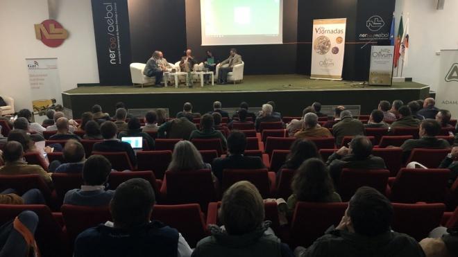 Baixo Alentejo é referência mundial na Olivicultura