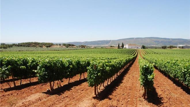 Beja e Évora com mais de 25% do volume de negócios do sector vitivinícola