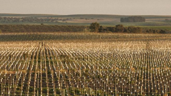 """""""Os Verdes"""" consideram que é preciso travar a expansão do olival intensivo"""