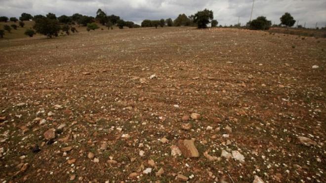 """Alentejo em seca severa e agricultores voltam a viver situação """"dramática"""""""