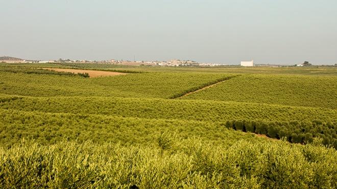 Agricultores e olivicultores reclamam objetividade sobre agricultura da região